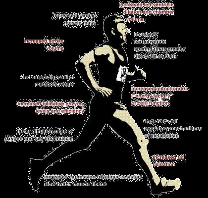 Cardiovascular Fitness Benefits