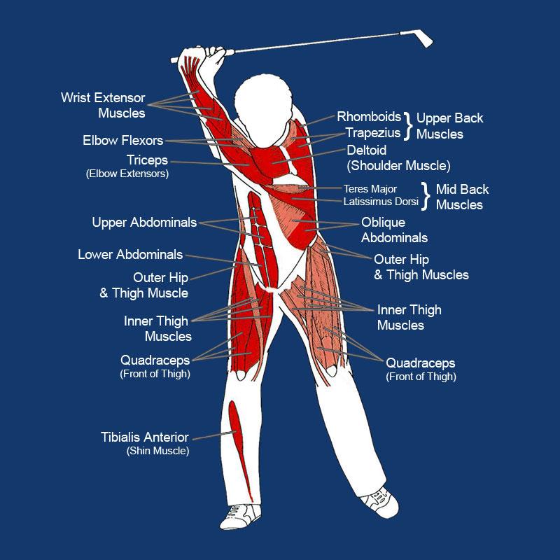 Golf Muscles
