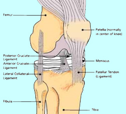 Knee Construction Model